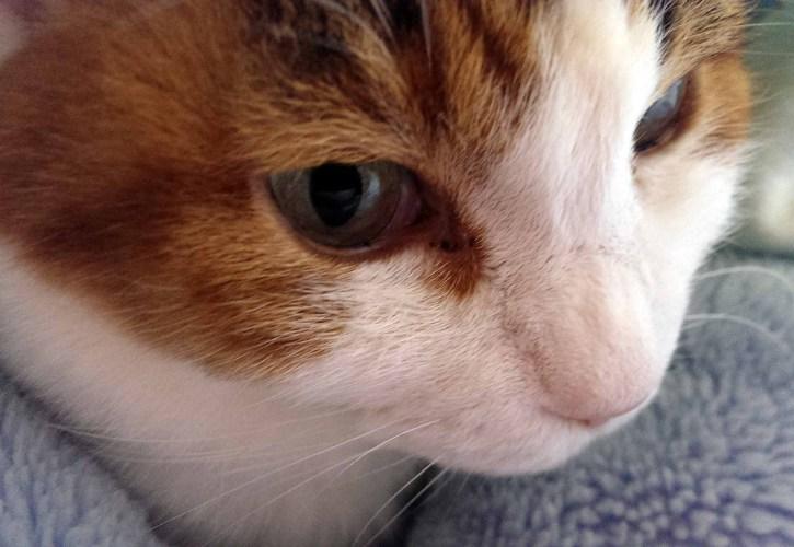 摂理猫と飼い主への気遣いに感謝します