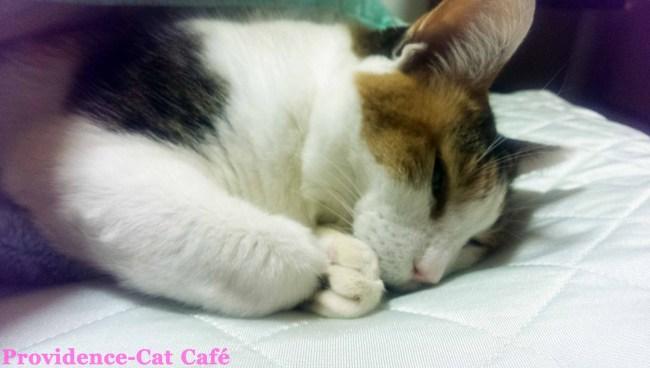 摂理猫メモリー58