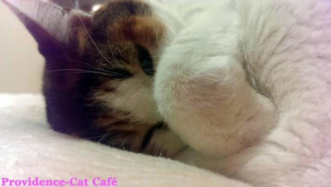 摂理猫メモリー116