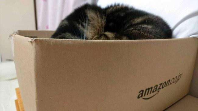 20161124摂理猫二世