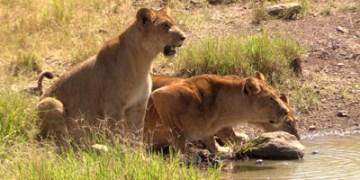 Believe Safari
