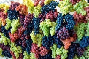 Как делают изюм из винограда в промышленности
