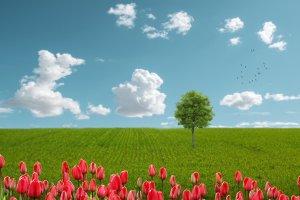 landscape, fantasy, field