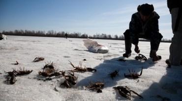 З 20 грудня на Тернопільщині заборонено ловити раків