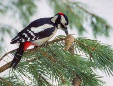 """У природному заповіднику """"Медобори"""" розпочалися зимові обліки птахів"""