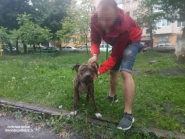 Патрульні склали адмінпротокол на господаря бійцівської собаки