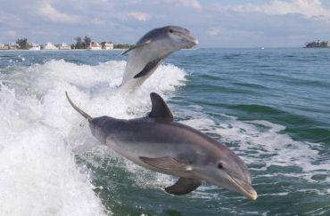 Дельфіни – люди моря