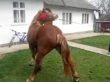 На Шумщині коні смертельно травмували пенсіонерку