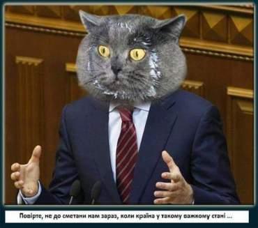 Тернопільська політика: коти проти сметани