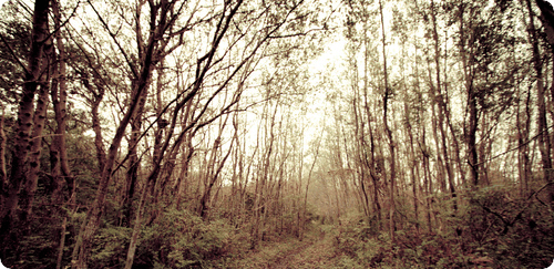forest - cropped