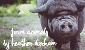 Farm Animals, by Heather Durham