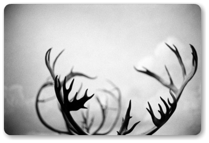 reindeer_corners