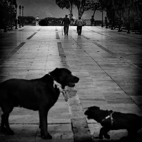 """Vidas paralelas"" - Jose Ant Domínguez - 290614"