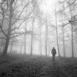 """""""El bosque"""" - Miguel Cabezas - 220714"""
