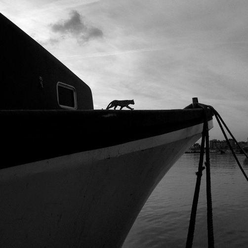 """""""Jaguar - Castellón, 2006"""" - Xavier Ferrer Chust - 061114"""