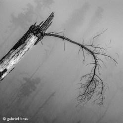 """""""Tenerife 2013 (serie Territorios)"""" - Gabriel Brau - 011115"""