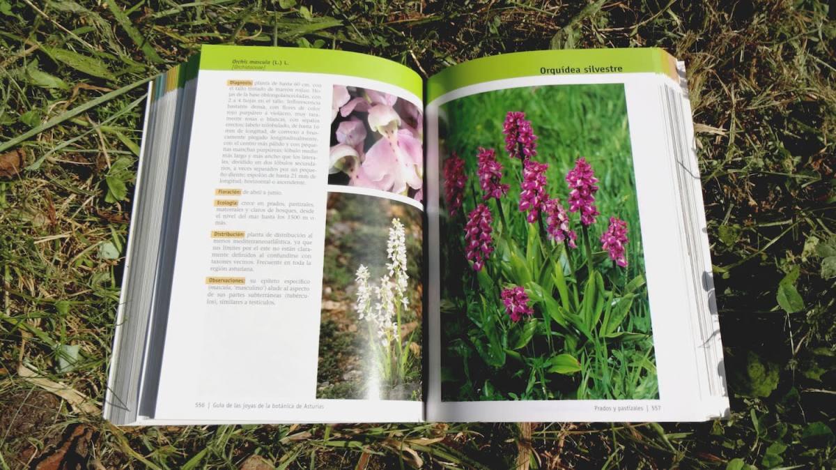 Guía-de-las-joyas-de-la-botánica-de-Asturias-2