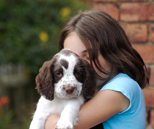 Es un perro la mascota para ti?