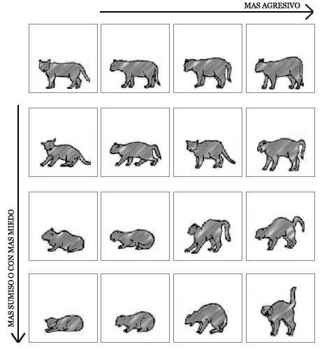 Progresión del lenguaje corporal en los gatos