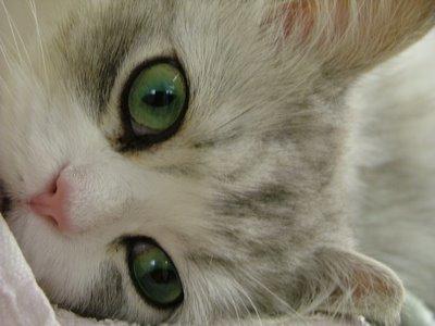 Самая прекрасная кошка