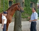Sir Heinrich - stallion