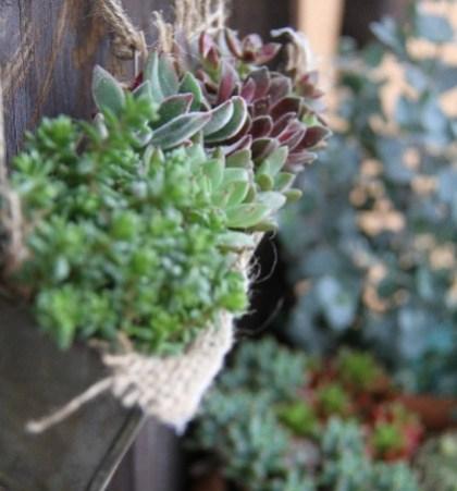 インテリアに人気の観葉植物が買える「グリーンフェア」も開催