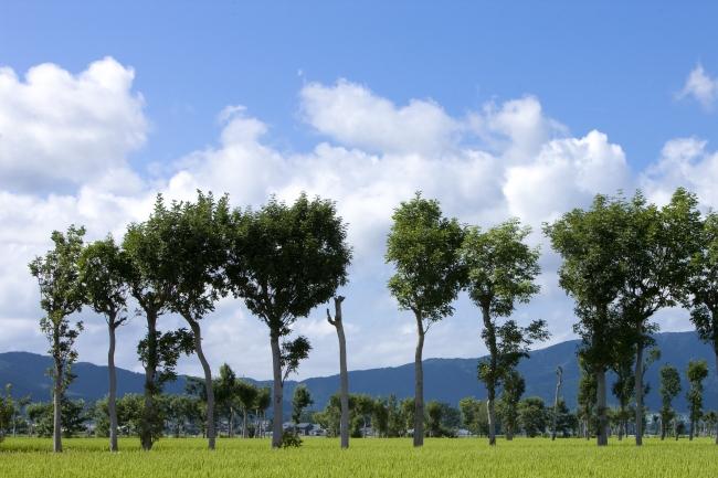 美しい田園を走る