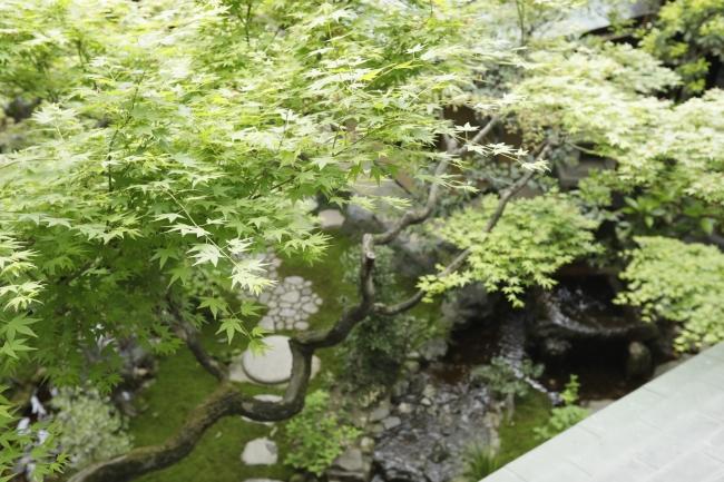 夏のそわか:お部屋から見える庭園の美しい青紅葉