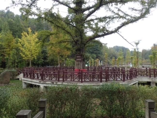 メタセコイア自生地(中国・湖北省) 写真提供:塚腰実、  厚井聡