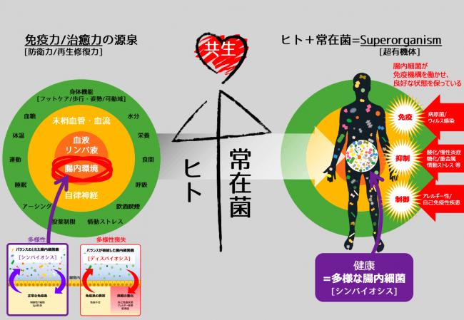 腸内フローラ重要性