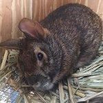 Our Mammal Residents Marshall the Marsh Rabbit