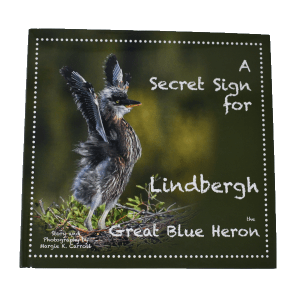 Lindberg Great Blue Heron Book
