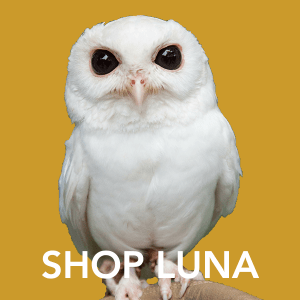 Shop Luna