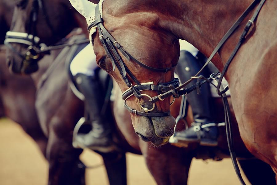 horses-close-up-of-racehorses