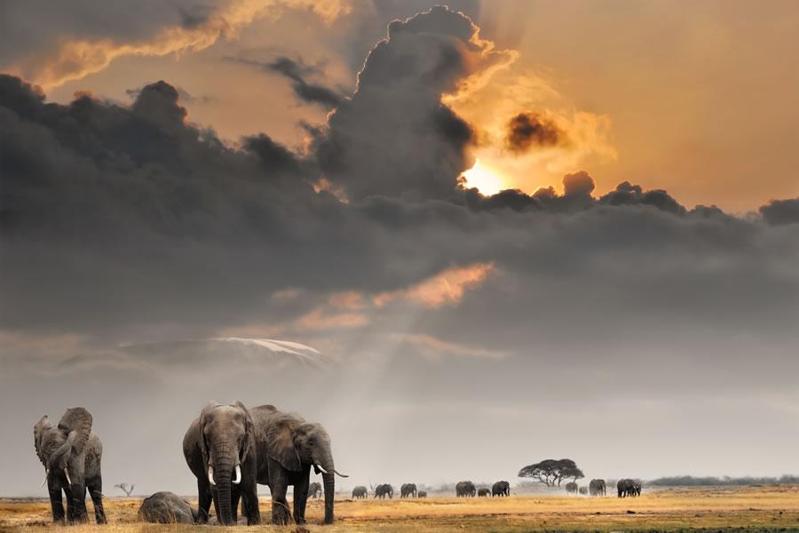 circus-elephants-elephants-sunset