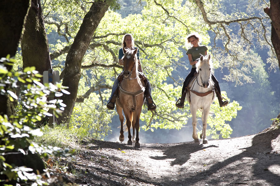 horse-riding-two-women-on-casual-horse-ride-in-forest