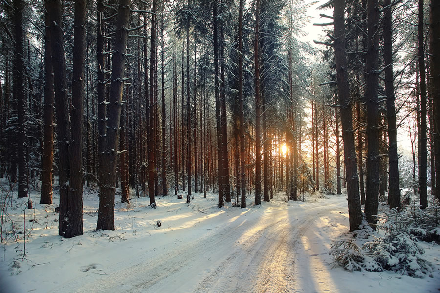 Seasonal Affective Disorder - SAD - forest-trees-with-shadows-on-snow