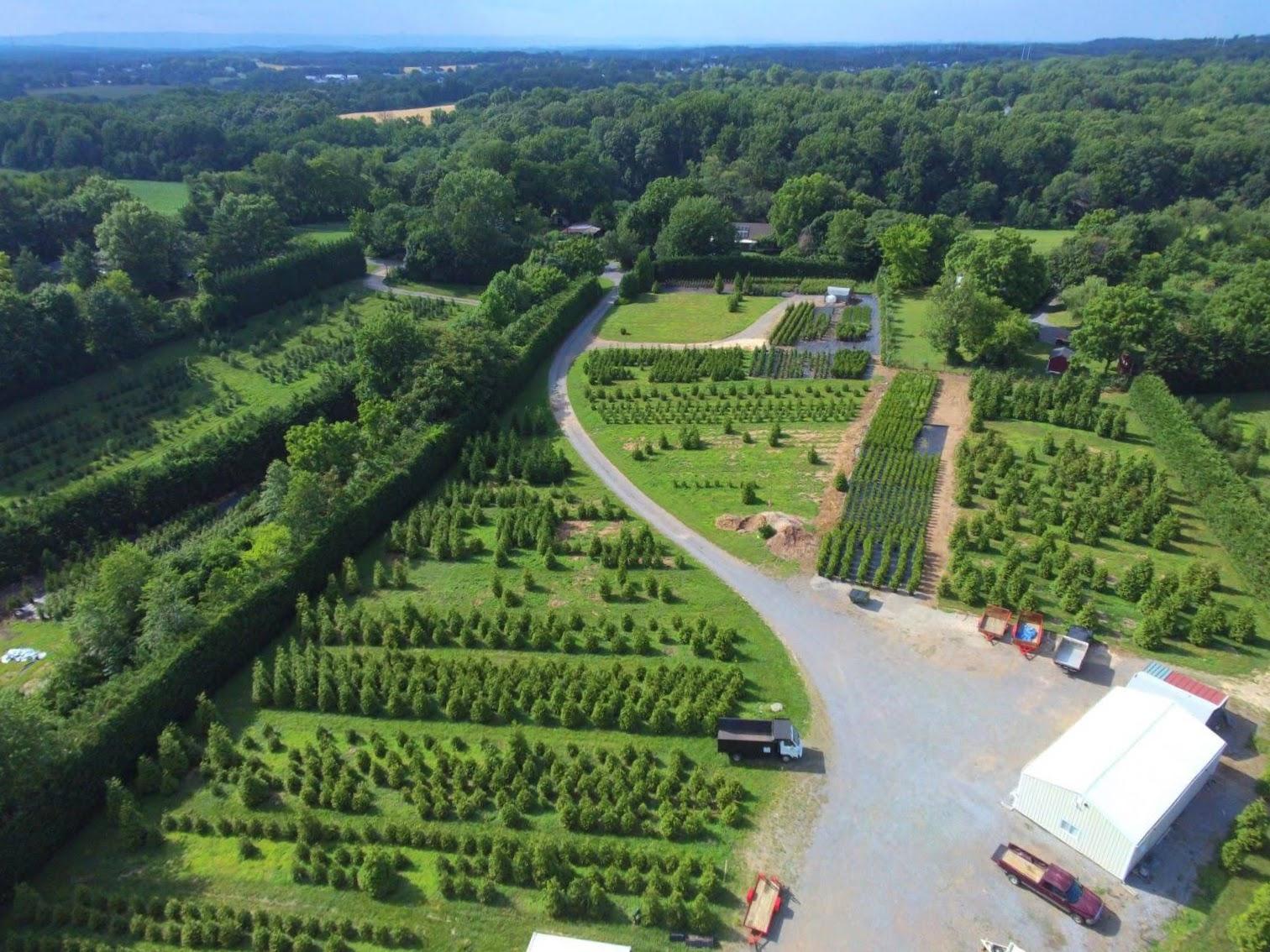 Pryor's Nursery Evergreen Tree Farm
