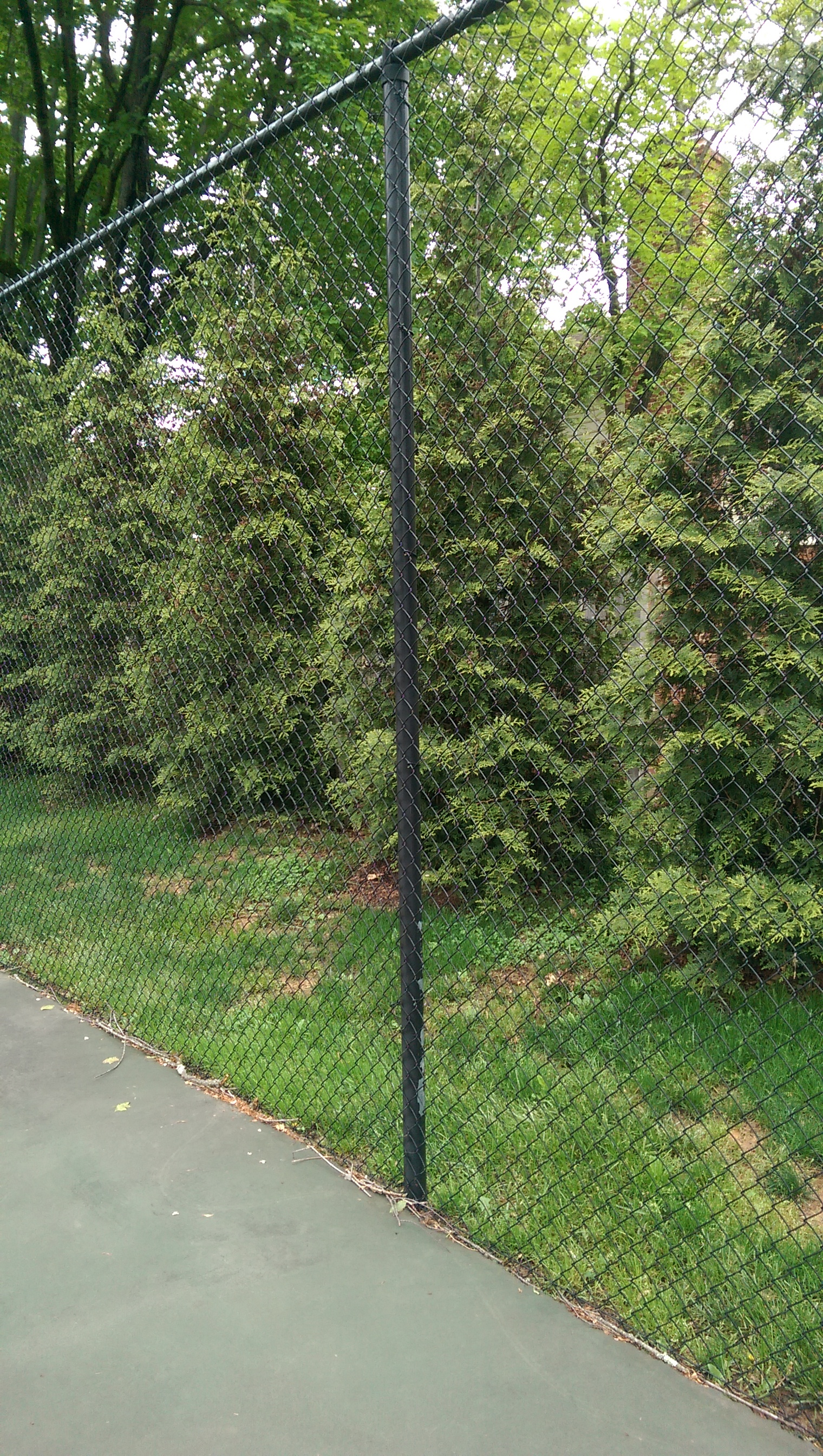 Green Giant Privacy Screening of Tennis Courts