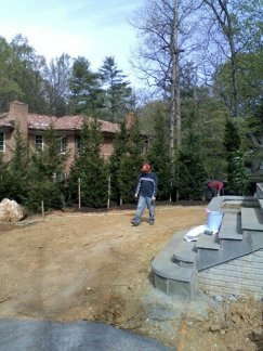 12 ft Tall Leyland Cypress