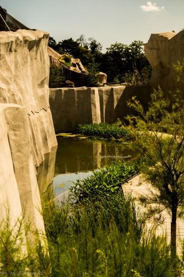 paryż zoo-27 (Kopiowanie)