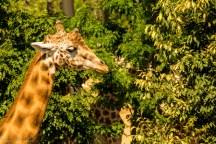 paryż zoo-8 (Kopiowanie)