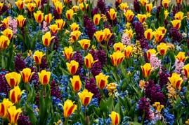 amsterdam kwiecień -17 (Kopiowanie)