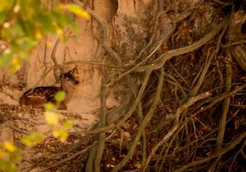 Bałtów - samotny w głębokim jarze