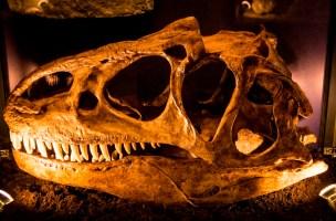 czaszka - bałtów