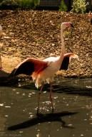 Paryż - Ogród Zoologiczny