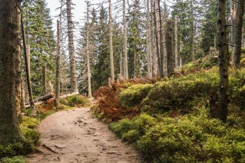 Babia Góra - na szlaku