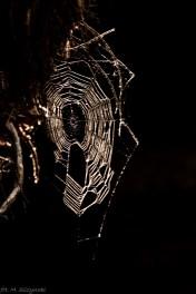 Błędne Skały - pająk nic sobie nie robi z turystów