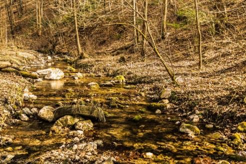 potok płynacy przez las w dolinie eliaszówki