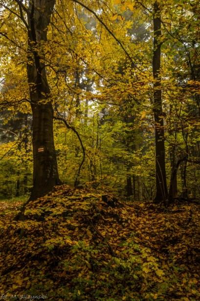 Główny Szlak Świętokrzyski - leśne ostępy